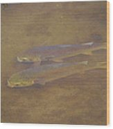 Two Fish In The Laguna Madre Wood Print