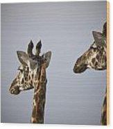 Two Giraffe Heads Side By Side Kenya Wood Print
