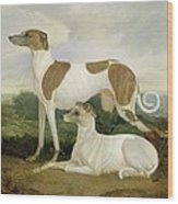 Two Greyhounds In A Landscape Wood Print
