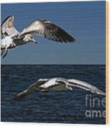 Two Gulls Wood Print