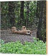 Two Headed Cheetah Wood Print