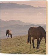 Two Horses Grazing On Mountain Top In Early Mornin Wood Print