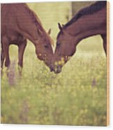 Two Horses In Field Wood Print