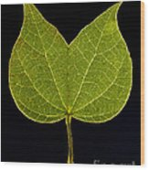 Two Lobed Leaf Wood Print