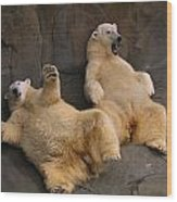 Two Lounging Polar Bears Wood Print by Joel Sartore