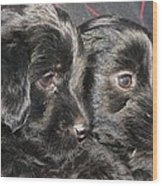 Two Matched Pups Wood Print