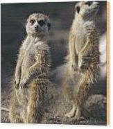 Two Meerkats, Suricata Suricatta, Stand Wood Print