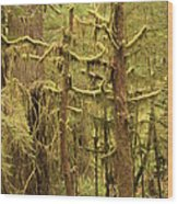 Waltzing In The Rainforest Wood Print