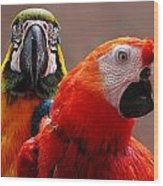 Two Parrots Closeup Wood Print