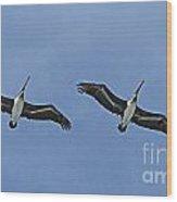 Two Pelicans In Flight Wood Print