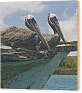 Two Pelicans Pelecanus Occidentalis On Wood Print