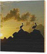Two Pelicans Perched On Rocks Wood Print