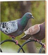 Two Pigeons Wood Print