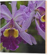 Two Pink Purple Orchids Wood Print