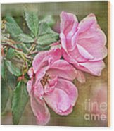 Two Pink Roses II Blank Greeting Card Wood Print