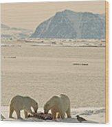 Two Polar Bears Eat A Carcass As Sea Wood Print