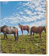 Two Quarters And An Appaloosa Wood Print