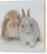 Two Rabbits.netherland Dwarf And Holland Lop. Wood Print
