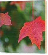 Two Red Maple Leaves Wood Print