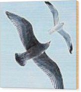 Two Seagulls Wood Print