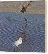 Two Strutting Egrets Wood Print