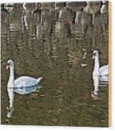 Two Swan Floating On A Pond  Wood Print