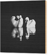 Two Swans Swimming Wood Print