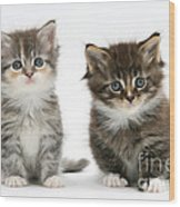Two Tabby Kittens Wood Print