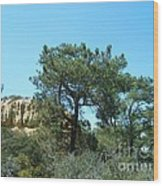 Two Torrey Pines Wood Print