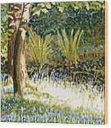 Sunlit Bluebells Llanina Ceredigion Wood Print