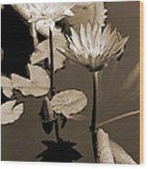 Two Waterlilies Sepia Wood Print