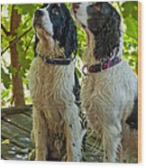 Two Wet Puppies Wood Print