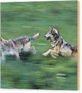 Two Wolves Running Through Meadow Wood Print