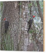 Two Woodpeckers Wood Print