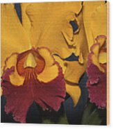 Two Yellow And Red Orchids Wood Print