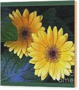 Two Yellow Dahlias Wood Print