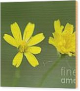 Two Yellow Flowers Wood Print