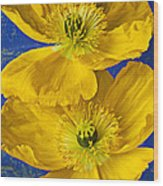 Two Yellow Iceland Poppies Wood Print