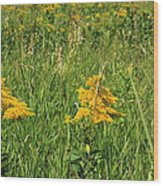 Two Yellow Wildflowers Wood Print