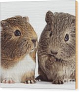 Two Young Guinea Pigs Wood Print