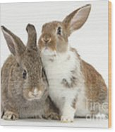 Two Young Rabbits Wood Print
