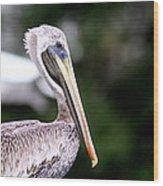 Ugly Beauty - Brown Pelican Wood Print