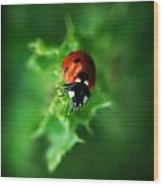 Ultra Electro Magnetic Single Ladybug Wood Print