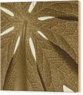 Umbrella In Sepia Wood Print