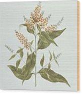 Umtar - Buddleia Polystachya Wood Print