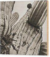 Under Saguaro Wood Print