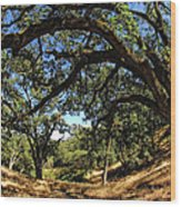 Under The Oak Canopy Wood Print