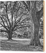 Under The Oaks Wood Print