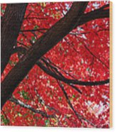Under The Reds Wood Print