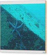 Under The Sea C Wood Print